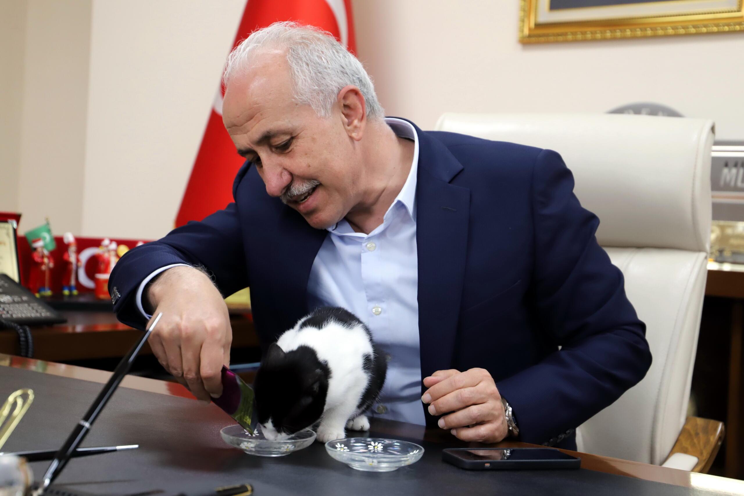 Bir kedisever olan Başkan Gültak, engelli kedi Zilli'yi makamında ağırladı