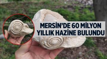 Bisikletleriyle gezintiye çıkan iki kardeş tarafından bulunan salyangoz fosili MEÜ Su Ürünleri Fakültesi'nde açılan Deniz Canlıları Müzesi'ne bağışlandı.