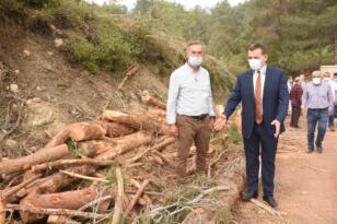 Başkan Özyiğit, ağaç kesimlerini yerinde inceledi